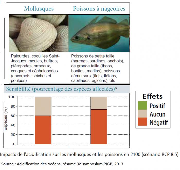 impacts-de-lacidification-sur-les-mollusques-et-les-poissons-en-2100