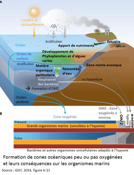 zones-peu-oxygenees-et-consequences-sur-les-organismes-marins