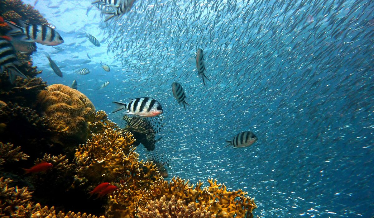 Océan : ses organismes marins et ses écosystèmes
